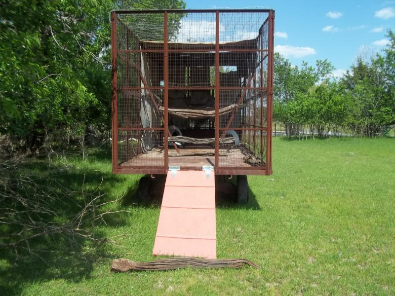 Turkey trailer - mobile pasture housing for healthier birds and better eating.