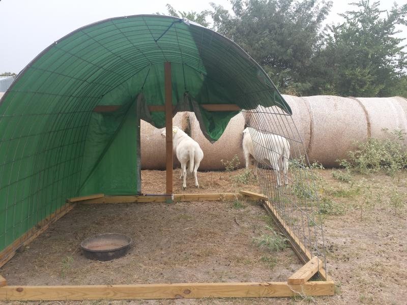 Dautobi Acres - Small scale sheep keeping - Shelter, Guardians